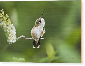 Wood Print featuring the photograph Hummingbird Flexibility by Christina Rollo