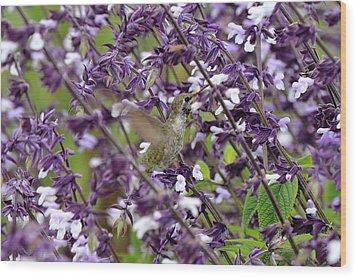 Hummingbird Flowers Wood Print