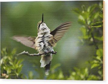 Hummingbird Happy Dance Wood Print by Christina Rollo