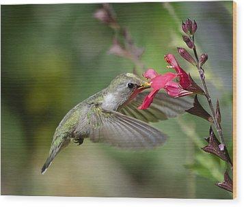 Hummingbird Heaven  Wood Print by Saija  Lehtonen