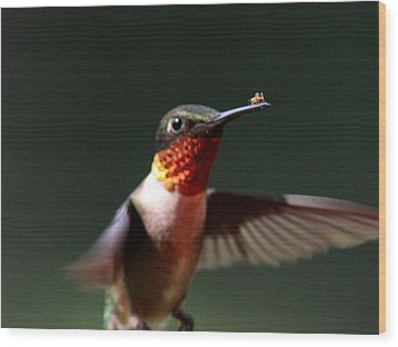 Hummingbird - Hitching A Ride - Ruby-throated Hummingbird Wood Print by Travis Truelove