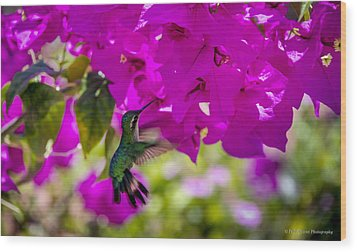Wood Print featuring the photograph Hummingbird In A Garden Paradise by Phil Abrams