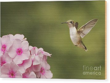 Wood Print featuring the photograph Hummingbird In Flight by Nancy Dempsey