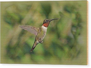 Hummingbird In Flight Wood Print by Sandy Keeton