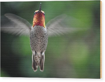 Wood Print featuring the photograph Hummingbird In Flight Male Anna by Jay Milo