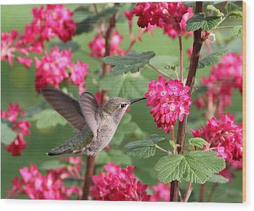 Hummingbird In The Flowering Currant Wood Print by Angie Vogel
