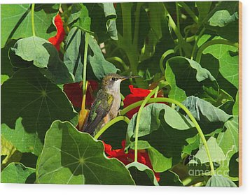 Wood Print featuring the photograph Hummingbird In The Nasturtiums by Marjorie Imbeau