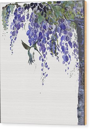 Hummingbird In Wisteria  Wood Print by Sibby S