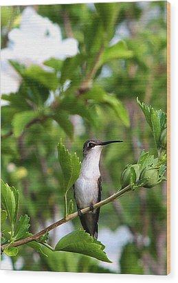 Wood Print featuring the photograph Hummingbird by John Freidenberg