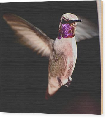 Wood Print featuring the photograph Hummingbird Male Anna In Flight  by Jay Milo