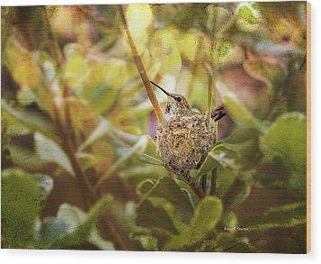 Hummingbird Mom In Nest Wood Print by Angela A Stanton