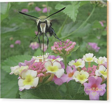 Wood Print featuring the photograph Hummingbird Moth by Donna Brown
