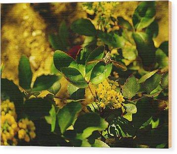 Hummingbird Moth Wood Print by Jeff Swan