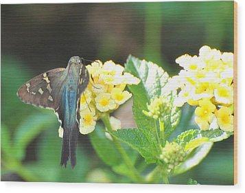 Wood Print featuring the photograph Hummingbird Moth On Yellow Flowers by Jodi Terracina