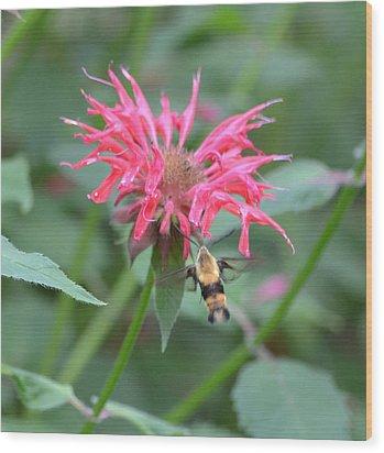Hummingbird Moth Wood Print by Richard Bryce and Family