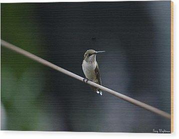 Hummingbird On A Wire Wood Print