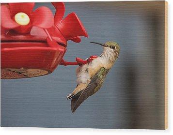 Hummingbird On Feeder Wood Print by Alan Hutchins