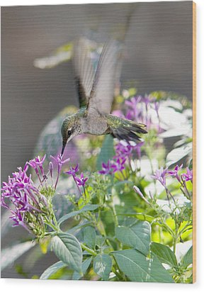 Wood Print featuring the photograph Hummingbird On Penta by Robert Camp