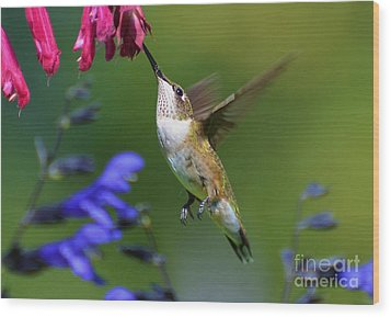 Wood Print featuring the photograph Hummingbird On Wendy's Wish Flower by Kathy Baccari