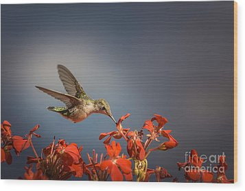 Hummingbird Or My Summer Visitor Wood Print by Jola Martysz
