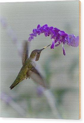 Hummingbird Series 01 Wood Print