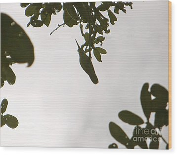 Wood Print featuring the photograph Hummingbird Silhouette 1 by Joy Hardee