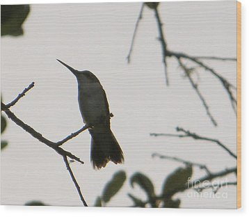 Wood Print featuring the photograph Hummingbird Silhouette 2 by Joy Hardee