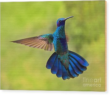 Hummingbird Splendour Wood Print