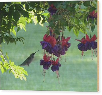 Wood Print featuring the photograph Hummingbird by Teresa Schomig