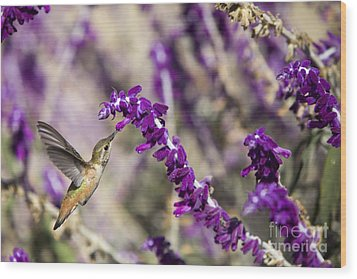 Wood Print featuring the photograph Hummingbird Collecting Nectar by David Millenheft