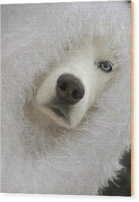 Humorous Pets Wood Print by Cindy Rubin