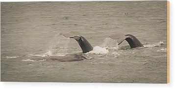 Wood Print featuring the photograph Humpback Flukes by Janis Knight