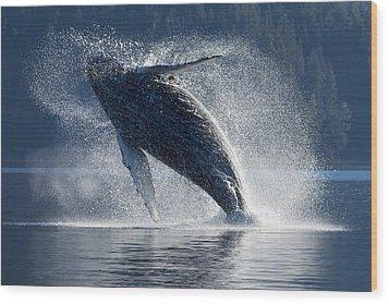 Humpback Whale Breaching In The Waters Wood Print by John Hyde