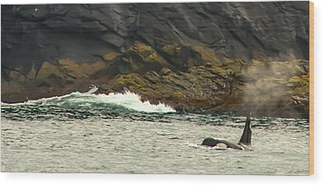 Humpback Whale Wood Print by Debra  Miller