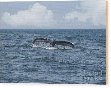 Humpback Whale Fin Wood Print by Juli Scalzi
