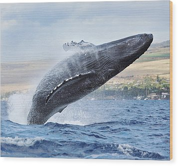 Humpback Whale Wood Print by M Swiet Productions
