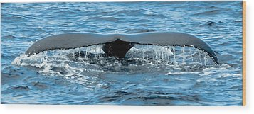 Humpback Whale Tail Off Bermuda Wood Print by Jeff at JSJ Photography
