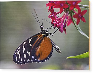 Hungry Butterfly Wood Print