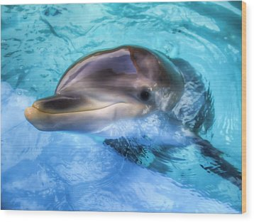 Wood Print featuring the photograph Hungry Dolphin by Tim Stanley