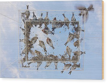 Hungry Little Birds Wood Print by Tim Grams