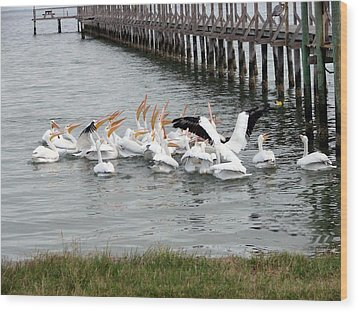 Wood Print featuring the photograph Hungry Pelicans by Linda Cox