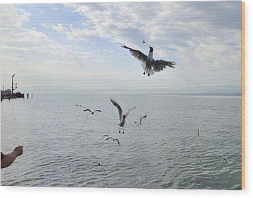 Hungry Seagulls Flying In The Air Wood Print by Matthias Hauser