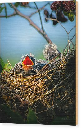 Hungry Tree Swallow Fledgling In Nest Wood Print by Bob Orsillo
