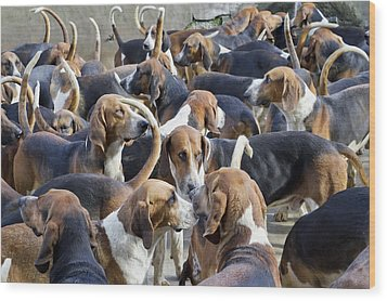Hunter Hounds Dogs Background Wood Print