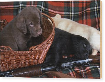 Hunters Puppy Dreams Wood Print by Skip Willits