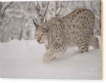 Hunting Lynx Wood Print