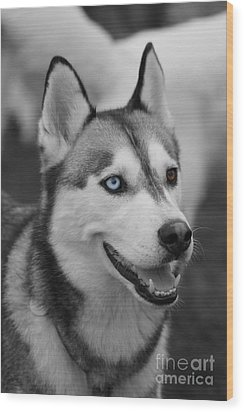 Wood Print featuring the photograph Husky Portrait by Vicki Spindler