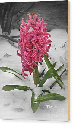 Hyacinth In The Snow Wood Print by E B Schmidt