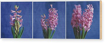 Wood Print featuring the photograph Hyacinth by Lana Enderle