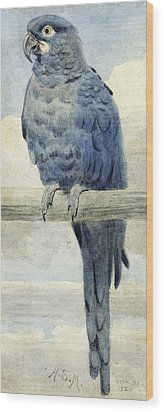 Hyacinthine Macaw Wood Print by Henry Stacey Marks